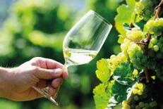 Symposium vigne et vin 2015