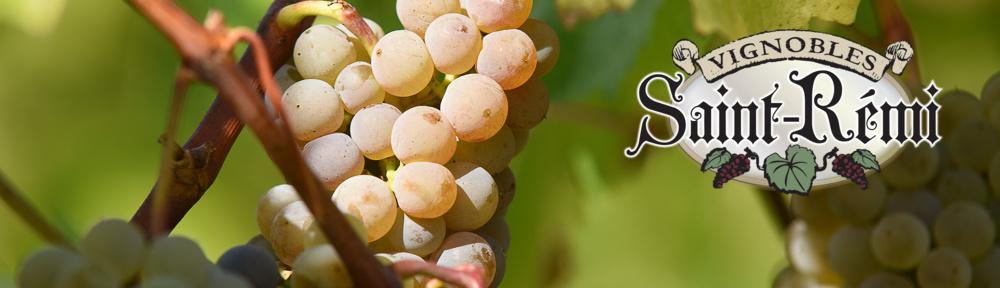 Vignobles Saint-Rémi
